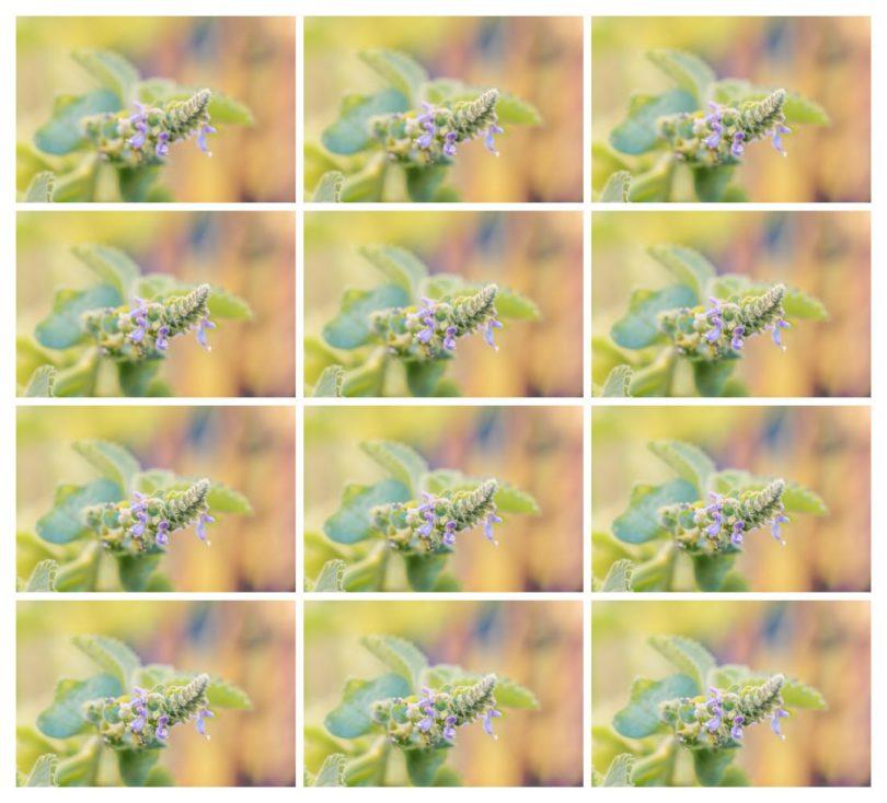 Einzelfotos aufgenommen mit Helicon Remote