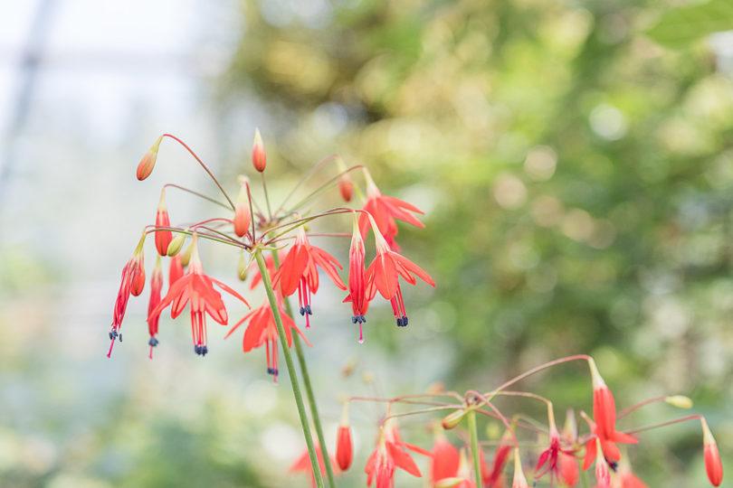 Botanischer-Garten-Zuerich
